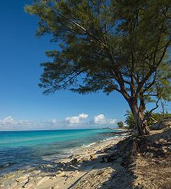 ビミニ諸島
